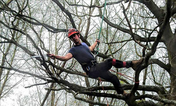Tree Surgeon at work in Abingdon